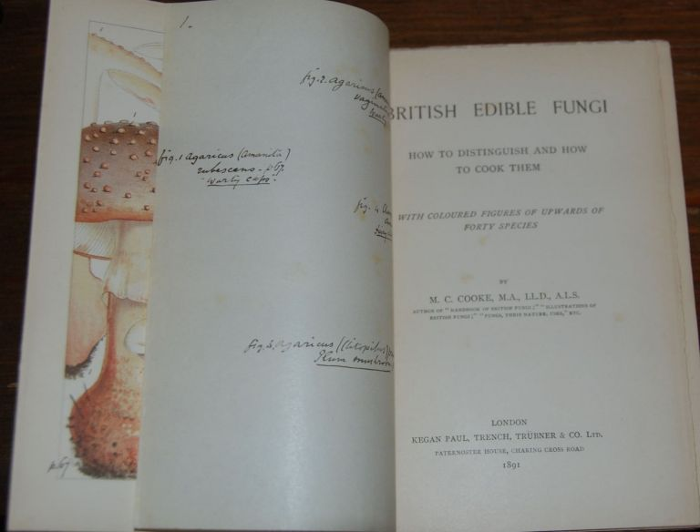 BRITISH EDIBLE FUNGI; How to distinguish and how to cook them with coloured figures up upwards of forty species. COOKE, ordecai, ubitt.