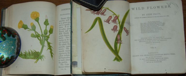 WILD FLOWERS.; Published under the direction of the Committee of General Literature and Education, appointed by the Society for Promoting Christian Knowledge. Anne PRATT.